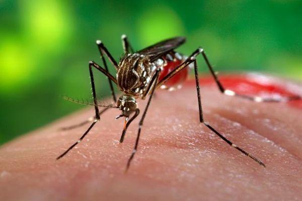 В РФ выявлен 2-ой случай заражения вирусом Зика
