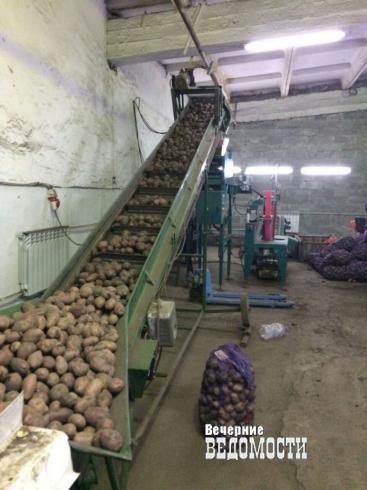 Россельхознадзор может оставить свердловчан без овощей и фруктов