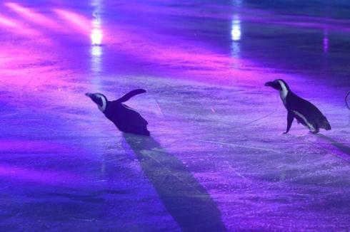 Чемпионат России по фигурному катанию в Челябинске открыли живые пингвины