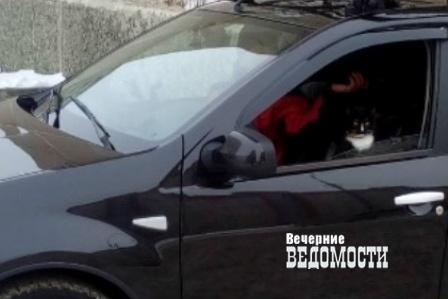 «Покоритель Эльбруса» уральский кот Граф отправился наБайкал