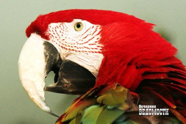 Самая красивая самка Екатеринбургского зоопарка будет определена зрительским голосованием