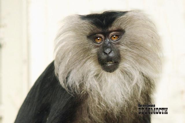 Самые красивые самки зоопарка сражаются зазвание «Зоомисс 2017»