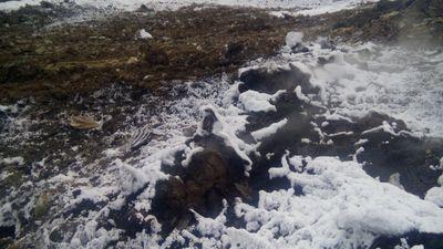 Генпрокуратура выявила нарушения вработе полигона ТБО вВерхней Пышме