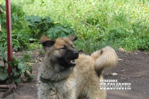 На Урале стая собак пыталась разорвать ребенка