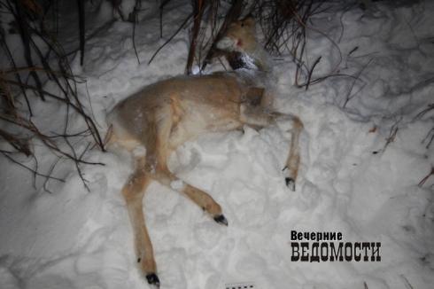 Убийство косули может обойтись уральскому браконьеру в два года лишения свободы