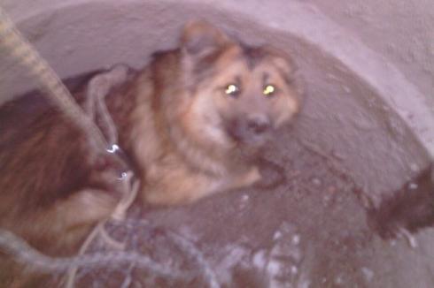 Лишь падение собаки в люк заставило коммунальщиков закрыть опасную шахту на оживленной трассе