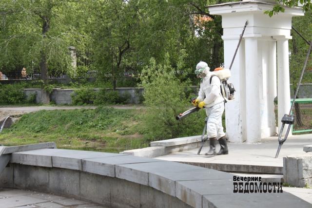ВСвердловской области отукусов клещей пострадали уже 42 человека