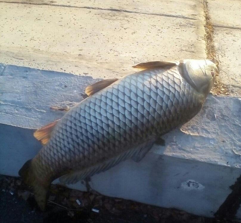 Генпрокуратура начала проверку из-за массовой погибели рыбы всвердловском водохранилище