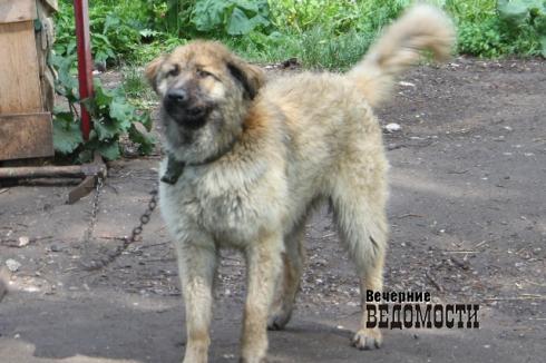 Бродячих собак в уральском городе убивают чем попало
