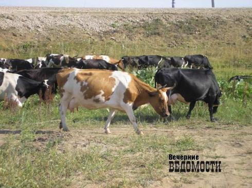ВКимрском районе оштрафован землевладелец, допустивший зарастание земельного участка
