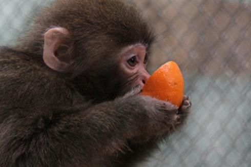 Неласковое уральское лето не помешало питомцам зоопарка переехать в летние вольеры