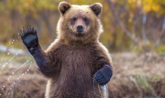 44-летний житель поселка Сосьва выжил после схватки с медведицей