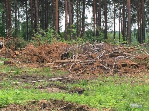 На Среднем Урале объявилась лесная «борзота»