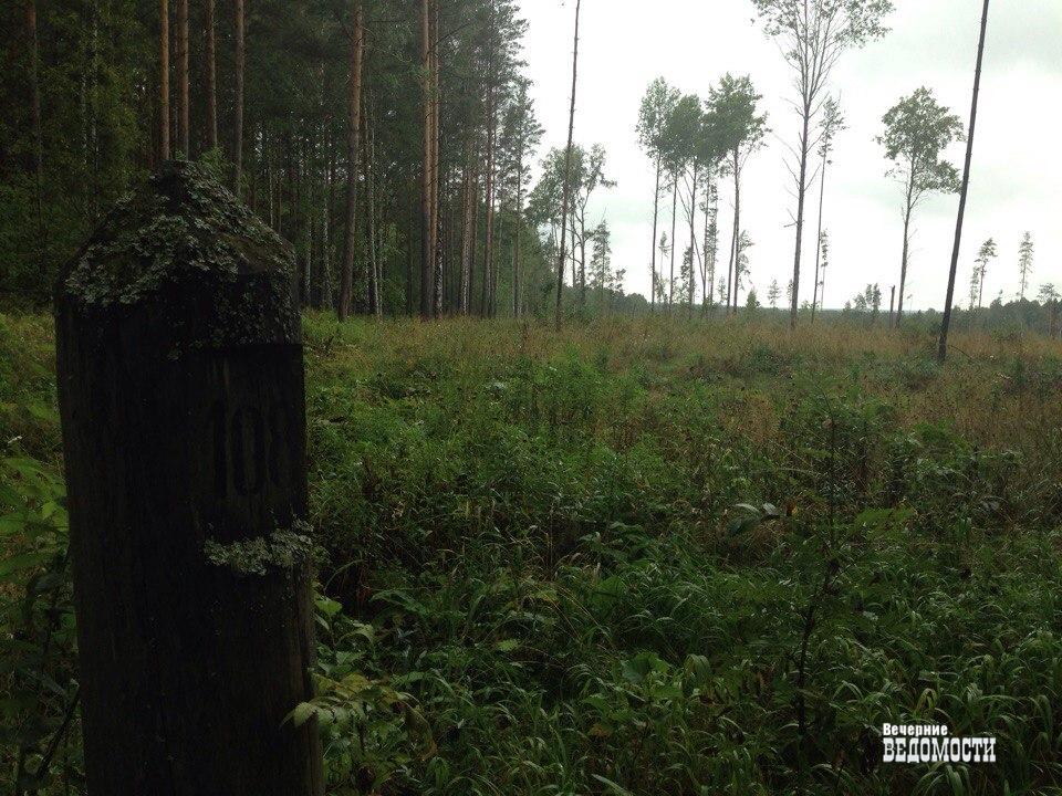 Книга сертификация сша лес получение жилищного сертификата для жителей дальнего востока