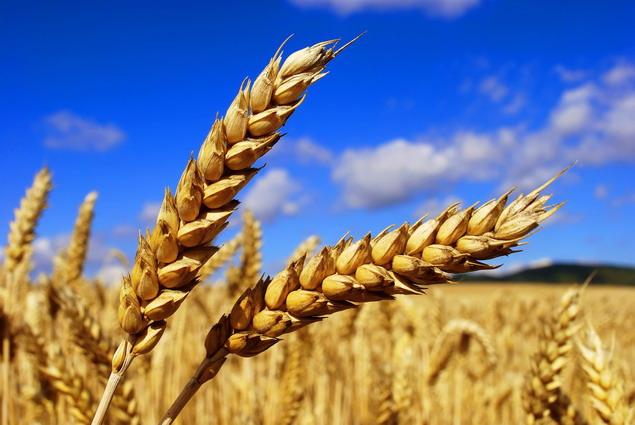 ВСвердловской области продолжается уборка урожая, невзирая наухудшение погоды
