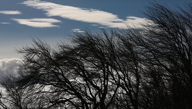 Сильный ветер ожидается вСвердловской области навыходных