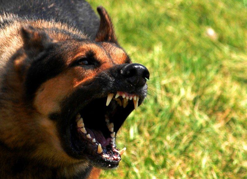 ВРевде около школы собачка напала надевочку. СКР проводит проверку
