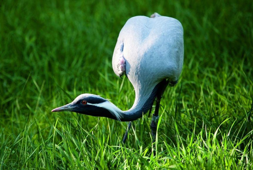 ВСвердловской области продавали птиц изКрасной Книги