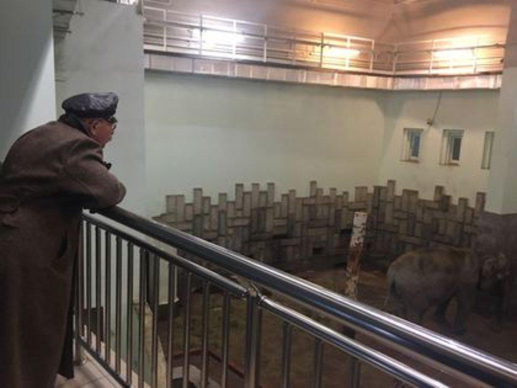 Александр Розенбаум может взять под опеку жителей Екатеринбургского зоопарка
