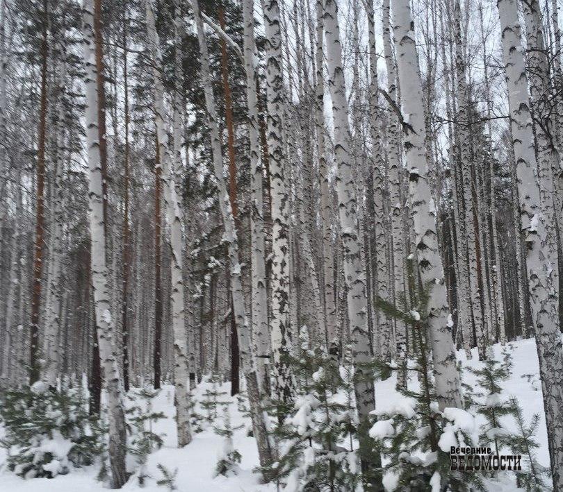 ВСвердловской области выявлено 450 незаконных свалок