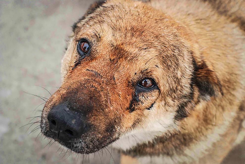 Слабонервным несмотреть: вЕкатеринбурге обнаружили тело беременной собаки