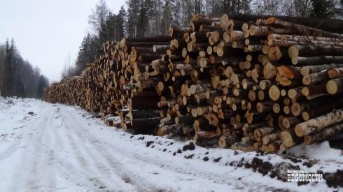 Две истории о незаконной рубке леса в Свердловской области: как надо и не надо работать силовикам