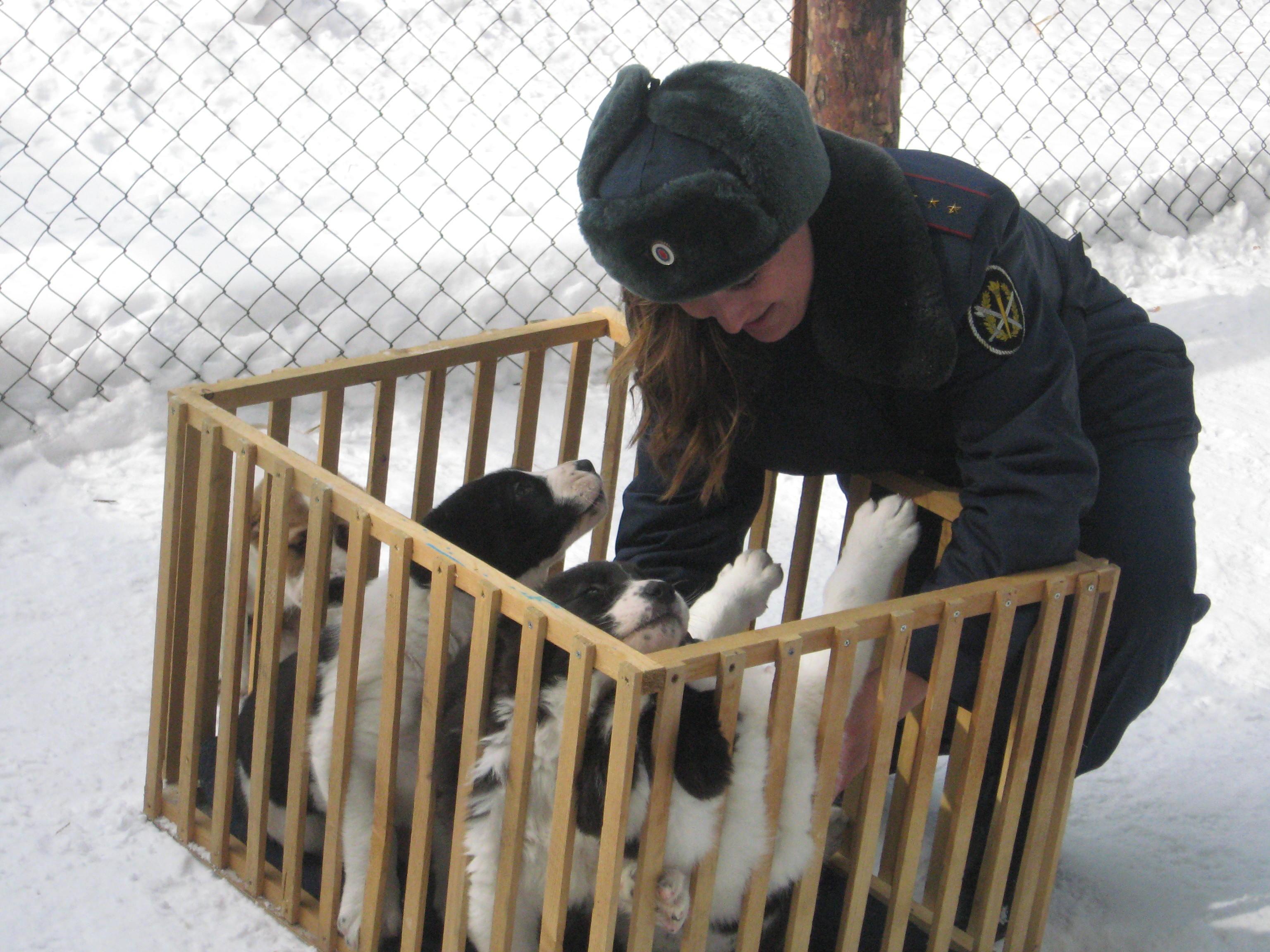 В уральской колонии начали дрессировку шести щенков среднеазиатской овчарки (ФОТО)