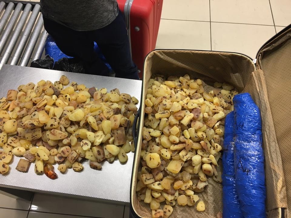 В Екатеринбурге вынесен приговор россиянину, который пытался вывезти 55 кг янтаря