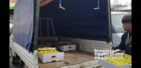 В Екатеринбурге обнаружили 600 килограмм «контрабандных» яблок
