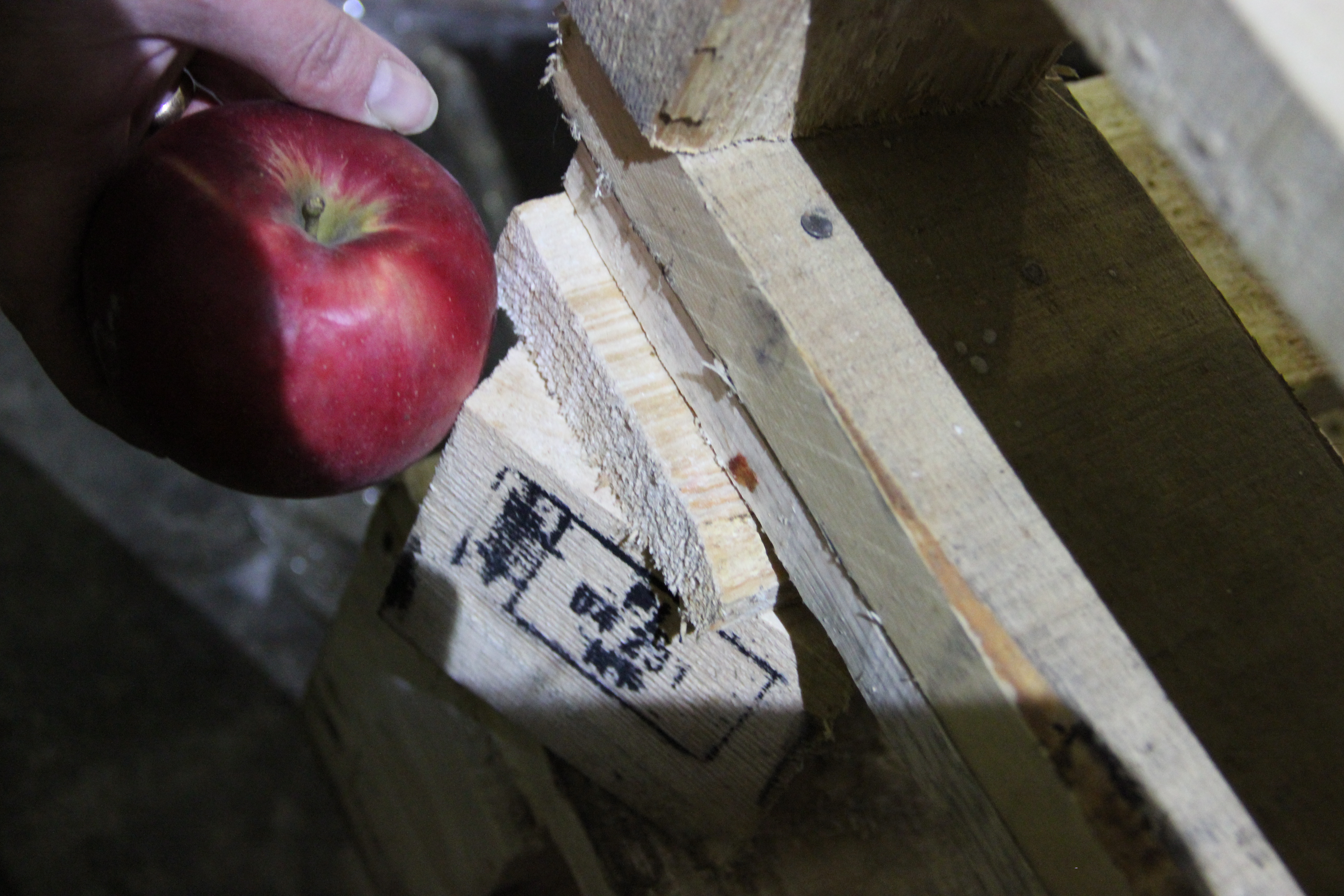 В Екатеринбурге уничтожили почти четыре тонны санкционных яблок