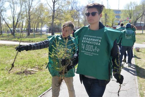ВЧелябинске восстановили аллею даурских лиственниц
