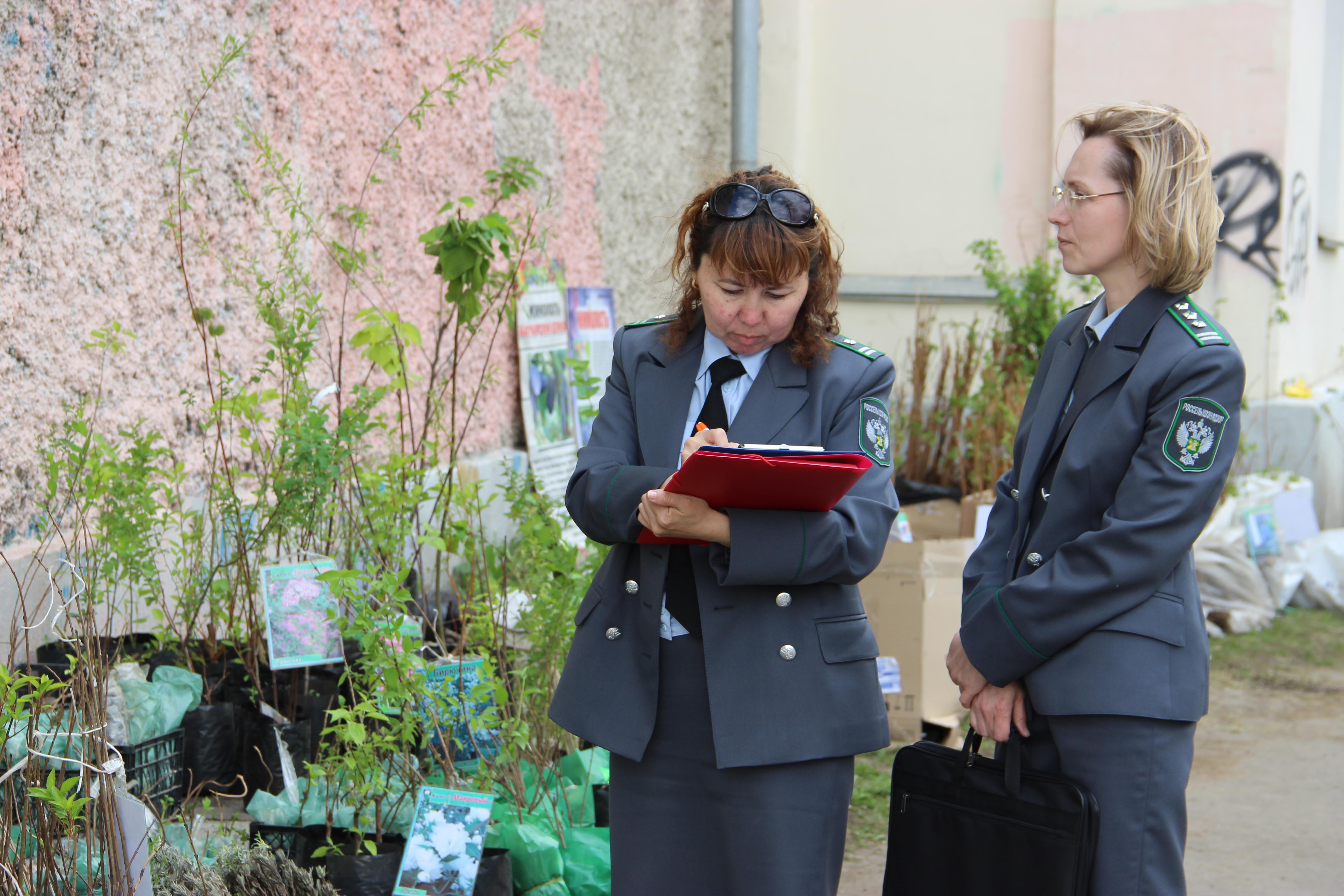 В Екатеринбурге пресекли незаконную торговлю саженцами деревьев