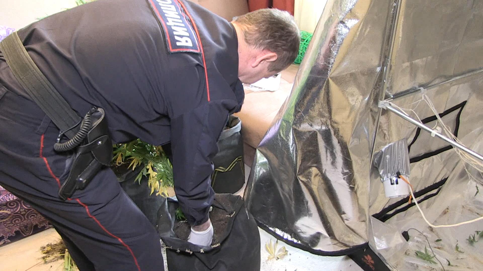 Задержан екатеринбуржец, устроивший наркоплантацию в своей квартире (ФОТО)