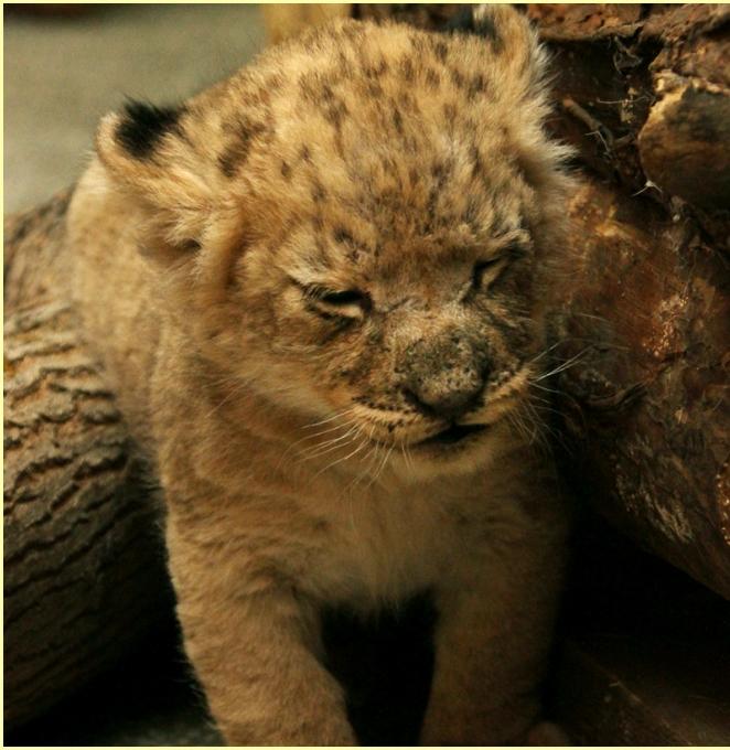 В Екатеринбургском зоопарке серьёзное пополнение