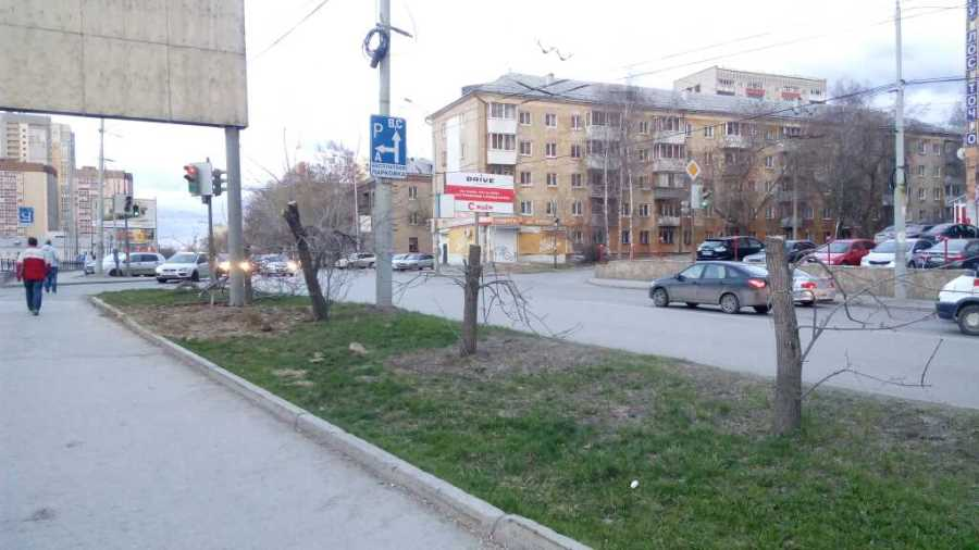 Чтобы лучше видеть рекламу, в Екатеринбурге спилили яблони