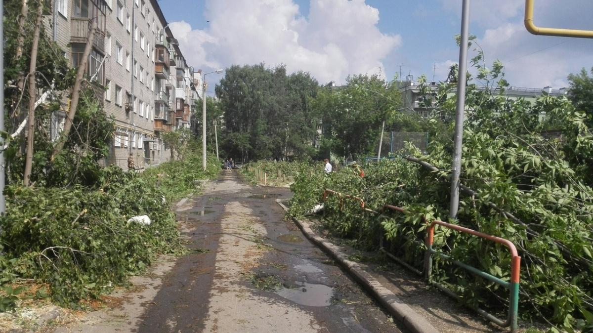 В Екатеринбурге управляющая компания вырубила во дворе на Шейнкмана практически все деревья