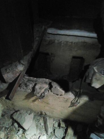 В Екатеринбурге спасатели нашли кота, который три недели сидел в вентиляционной трубе