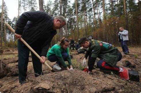 Под Екатеринбургом посадили пять тысяч сосен и два десятка кедров