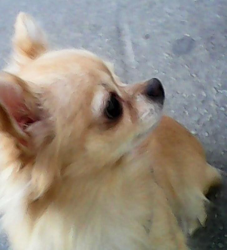 В Екатеринбурге у бабушки украли собаку. Внук и десятки жителей города просят похитителей вернуть собачку