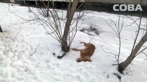 Неадекватный житель Екатеринбурга выбросил собаку с девятого этажа
