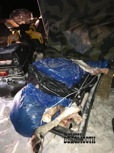 Инспекторы ГИБДД задержали полицейского из Первоуральска  с двумя тушами лосей