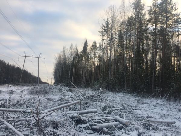 В Серове суд рассмотрит дело о незаконной рубке 24 деревьев