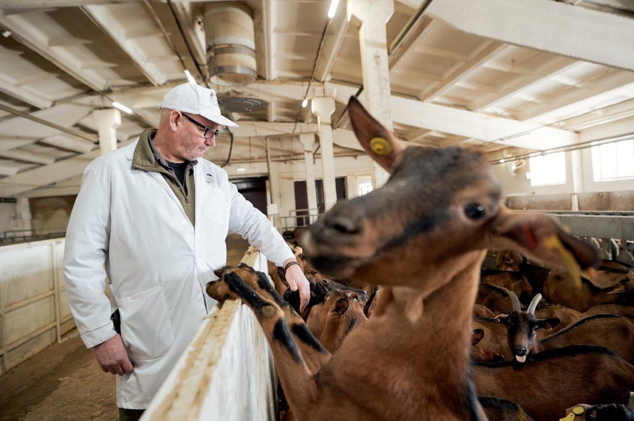 «Здесь все организовано так, как если бы я делал это сам»: международный эксперт в области животноводства посетил козью ферму «УГМК-Агро»