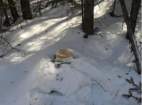 В Серове предприниматель незаконно вырубил более 240 деревьев