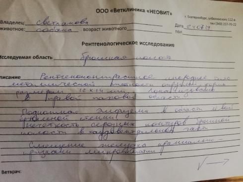 В Екатеринбурге хозяин выстрелил в свою собаку и попросил ветеринара её усыпить