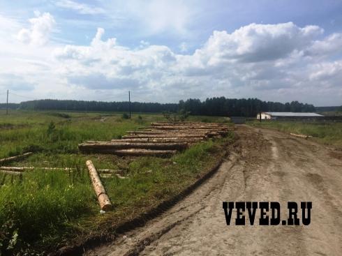 Лесорубы прекратили валку леса у коттеджного поселка Рассоха под Екатеринбургом