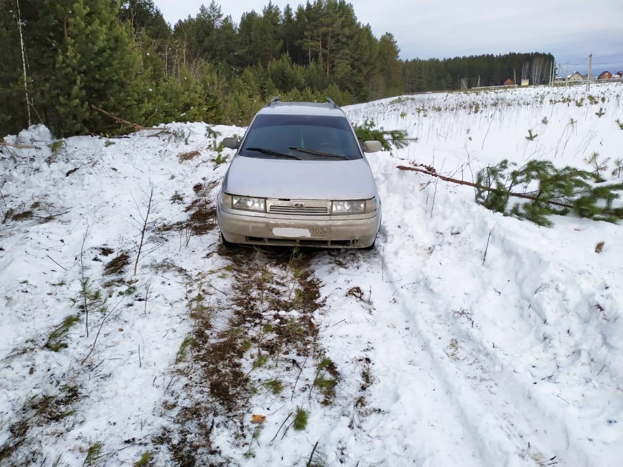 В Белоярке неизвестные продолжили вырубать лес, несмотря на запрет суда и прокуратуры