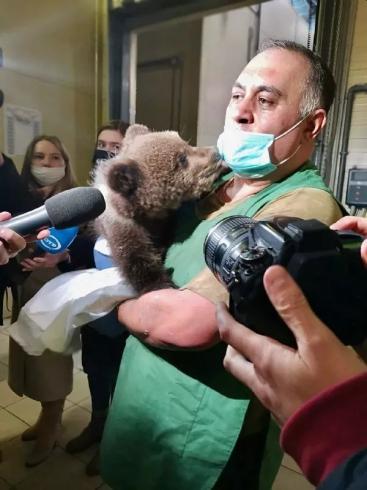 В Хабаровск из столицы Урала доставили медвежат
