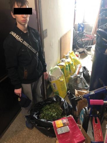 В Екатеринбурге полиция обнаружила плантацию конопли