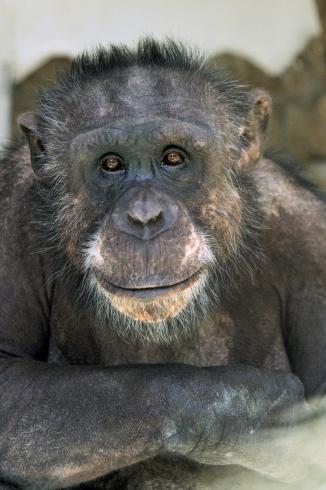 «Мы очень ждем своих посетителей»: как Екатеринбургский зоопарк выживает во время пандемии